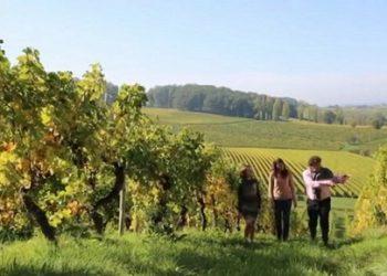 Dordogne-Périgord: Bergerac- en Monbazillac-wijnen - Château Bélingard Comte de Bosredon