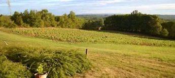Dordogne Périgord: ook op Domaine Chante l Oiseau wordt Vin de Domme geproduceerd.